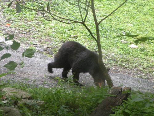 Bear1Gburg