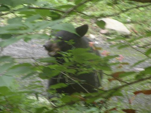 Bear2Gburg