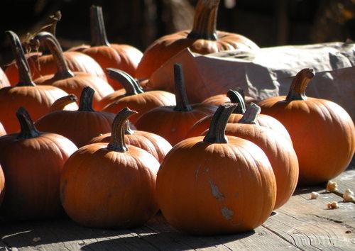 Grape Did It - pumpkins