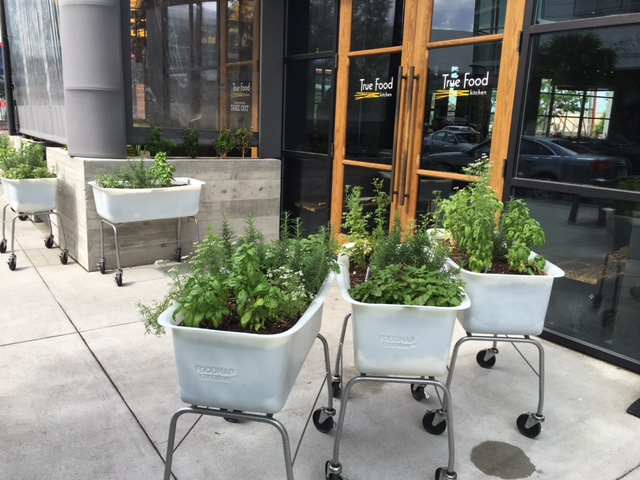 GDI - DC outdoor herb pots