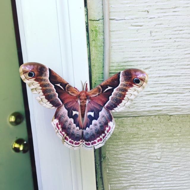 GDI - moth