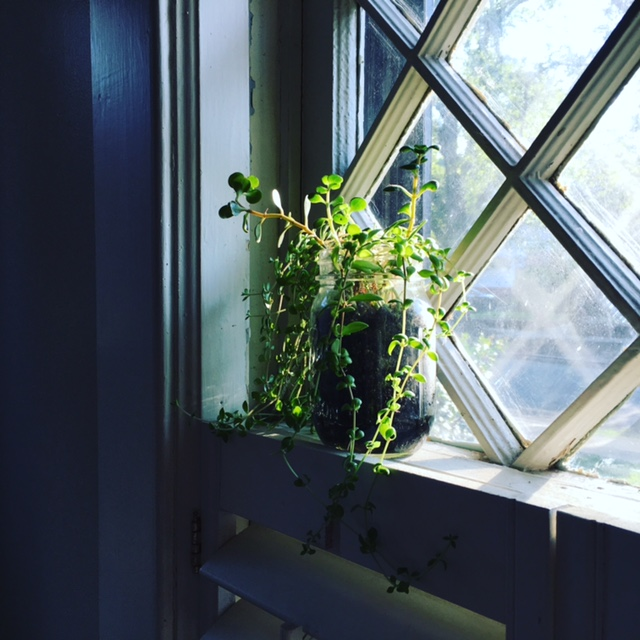 GDI - mason jar planter