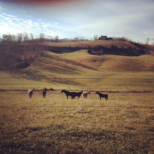 GDI - TG horses