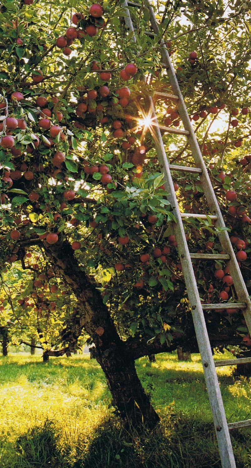 GDI - apple picking trouvais image
