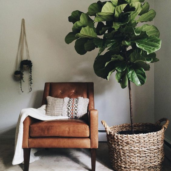 GDI - domino - fiddle leaf fig
