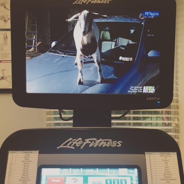 GDI - CW workout goat