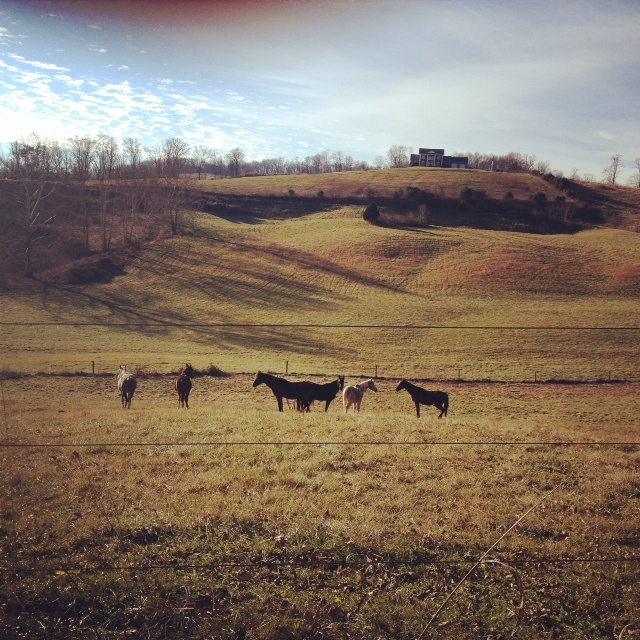GDI - travel horses