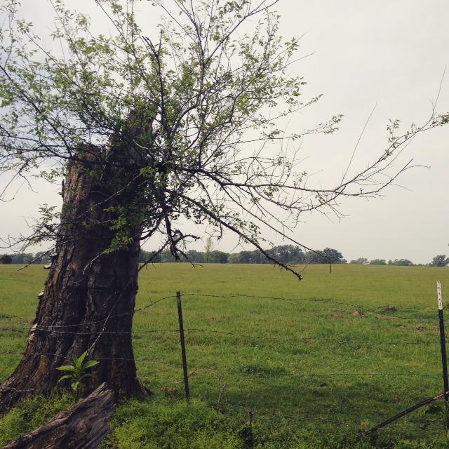 GDI - tree TX
